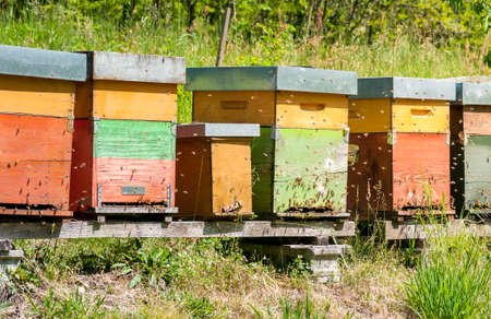 Row of beehive boxes in a apiary with bees flying in the farm.