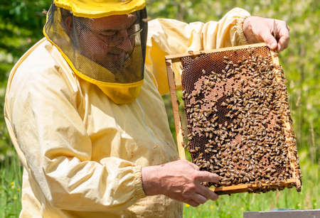 Beekeeper is working with bees and beehives on the apiary. Beekeeping concept.