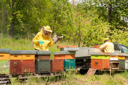 Beekeepers are working with bees and beehives on the apiary. Beekeeping concept.