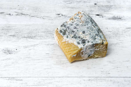 Old cheese covered with mold on rustic white wooden background.
