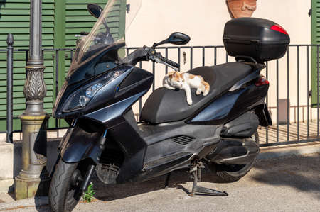 A white-red cat in the seat of a scooter enjoying the sun.