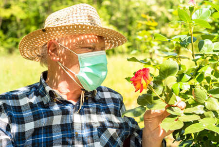 Elderly man wearing a protective mask in the domestic quarantine period in the garden to cure roses. 版權商用圖片 - 146394303