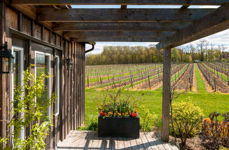 View over vineyard on a sunny spring day. 版權商用圖片