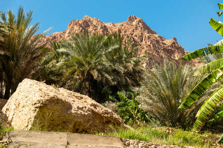 Landscape of Wadi Tiwi oasis with mountains and palm trees in Sultanate of Oman.