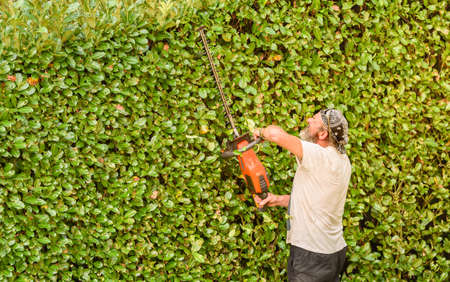 Professional Gardener cuts hedge with an electric hedge trimmer, autumn garden maintenance.