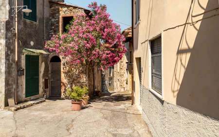 Narrow street of the charming Tuscany village Mommio Castello, at the top of the hill of Versilia, province of Lucca, Italy 版權商用圖片
