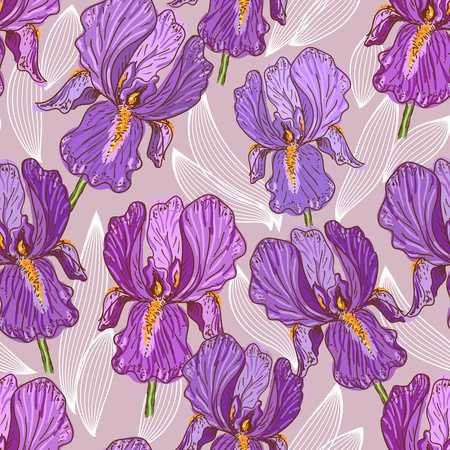 iris flower: Purple Iris Illustration
