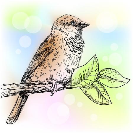 sparrow Stock Vector - 13186386