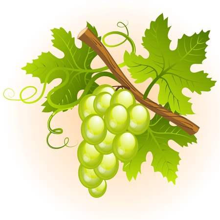 Grape cluster with green leaves Vector