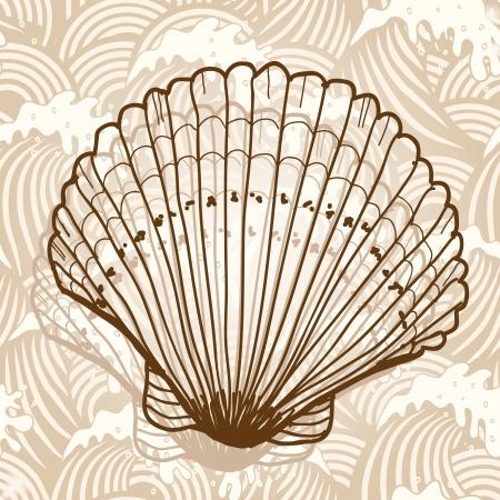 shell pattern: Sea shell Illustration