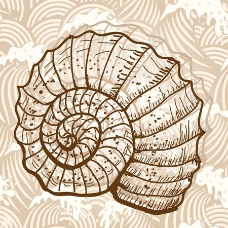nautilus shell: Sea shell Illustration