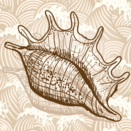 Sea shell Illustration