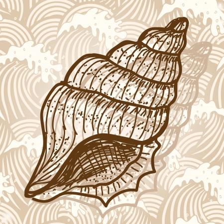 Sea shell Illusztráció