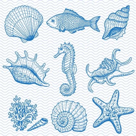 etoile de mer: Main mer collection originale dessin�e illustration