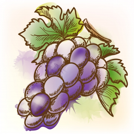 Grape, watercolor painting  Çizim