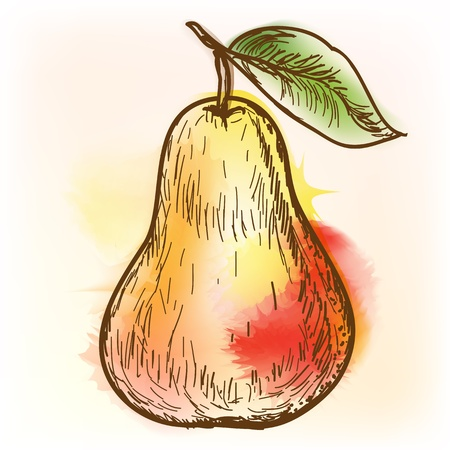 Pear, watercolor painting Stock Vector - 15561243