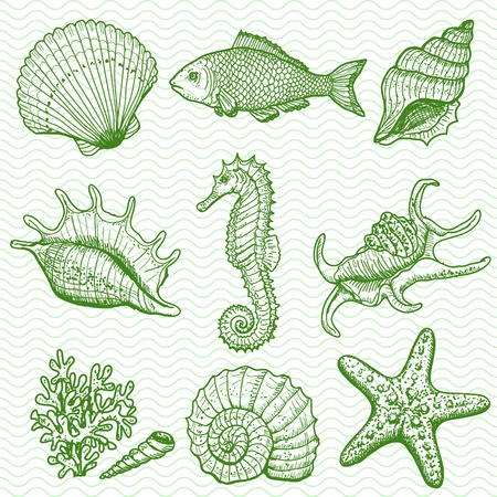 etoile de mer: Main mer collection originale dessin�e illustration