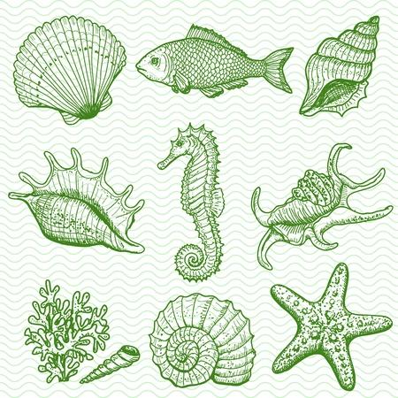 caballo de mar: Mano mar colección original dibujado Vectores