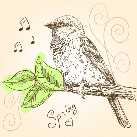 Hand drawn sparrow bird sitting on a branch Vector