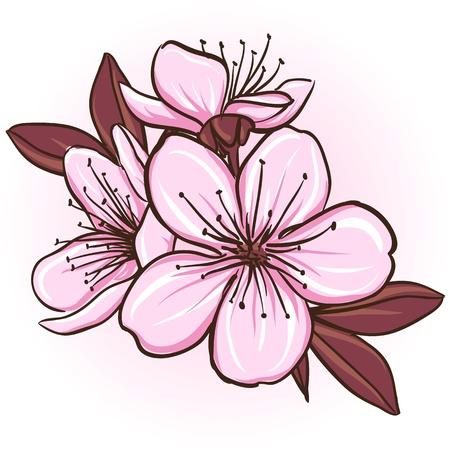 Cherry blossom  Decorative floral illustration of sakura flowers