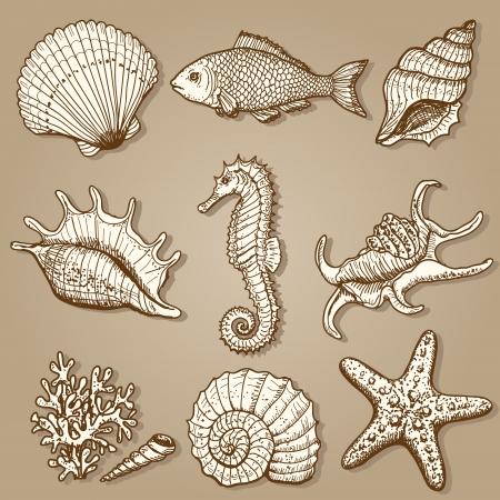conchas: Por mar colecci?riginal elaborado ilustraci? Vectores
