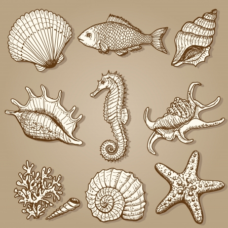 shell fish: Sea collection  Original hand drawn illustration