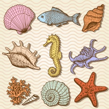 caballo de mar: Por mar colecci?n original elaborado ilustraci?n