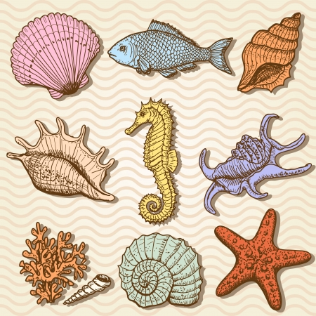 coral colored: Sea collection  Original hand drawn illustration