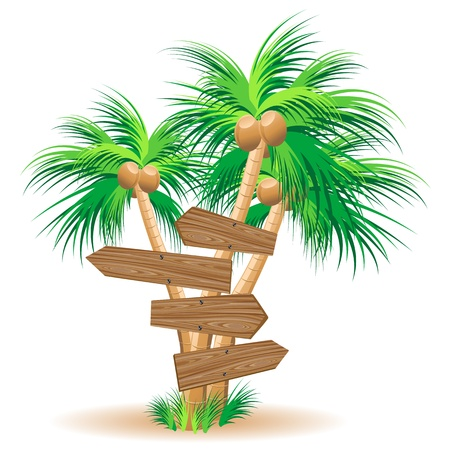 Wooden signboards on palm trees Stock Vector - 19828781