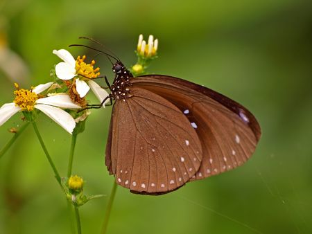 ButterFly Stock Photo - 6430252