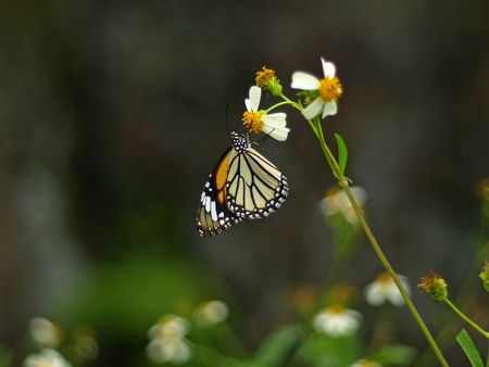 ButterFly Stock Photo - 6430559