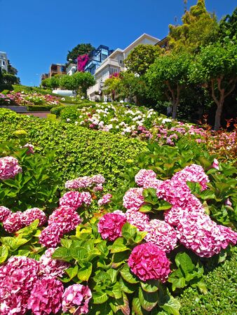 Lombard Street of San Francisco photo