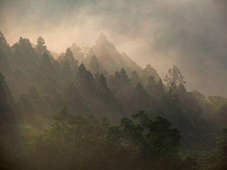 amanecer: Sol de oro por encima del bosque en la madrugada romper Foto de archivo