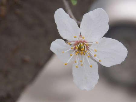 apple tree Standard-Bild