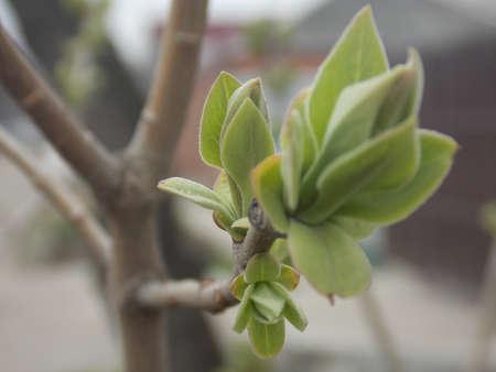 first leaves Standard-Bild