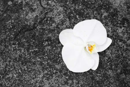 White orchid flowers on the rocks. Space for text