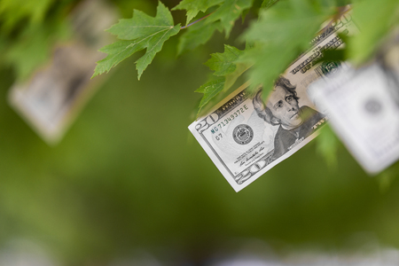 Money growing on tree, USA currency dollar, cash crop, money tree, finance concept stock, investment, passive income, inheritance, loans, saving, money doesnt grow on trees