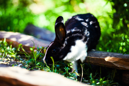 Black and white rabbit on green grass