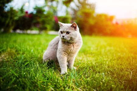 Sweet cat on green grass Banque d'images