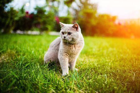 Sweet cat on green grass Reklamní fotografie