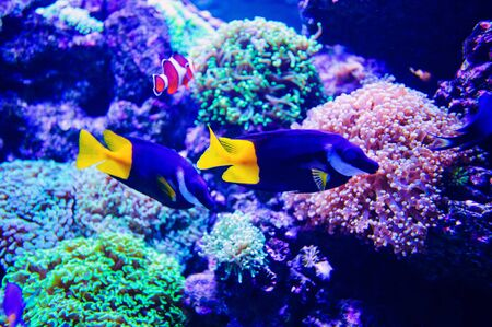 Wonderful and beautiful underwater world with corals and tropical fish. Banco de Imagens - 141091288