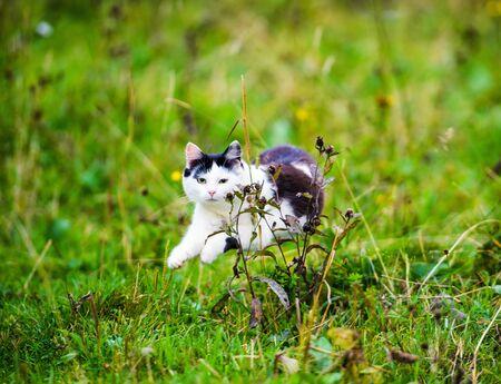 hunting cat jumping through grass Archivio Fotografico