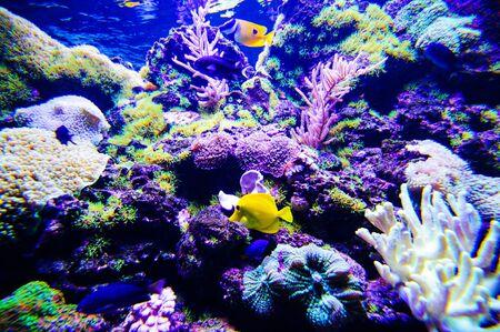 Monde sous-marin merveilleux et magnifique avec des coraux et des poissons tropicaux. Banque d'images