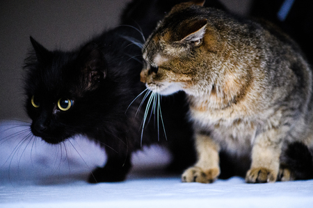 angry cat looking to an other cat