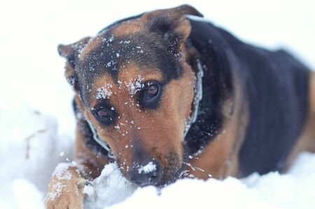 Funny dog on the snow