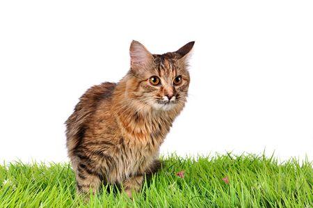 Funny kitten cat on green grass