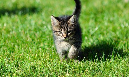 Kitten on the grass
