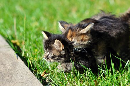 Two kittens on the grass
