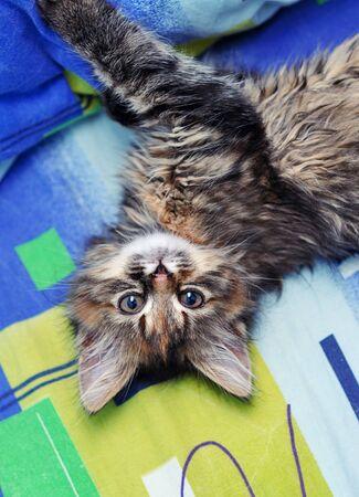 Cute little kitten 写真素材