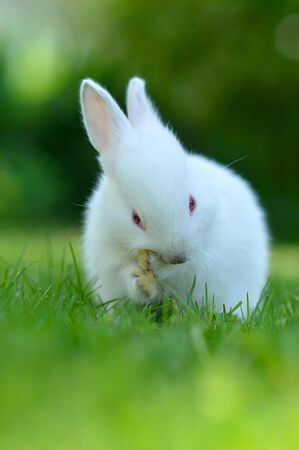 Funny baby white rabbit in grass